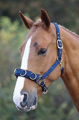 Economy Web Lunge Cavesson Horse Equestrian Training Learning Teaching