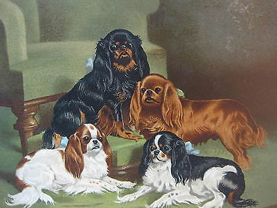 Toy Spaniels ~ Antique Print/ Plate from Cassell's Book of the Dog ~19th Century
