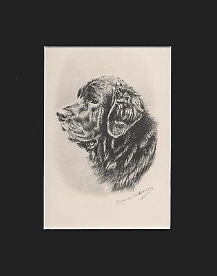 "Newfoundland Dog Portrait by M. Kirmse Matted Print 1938  8x10"" Limited Edition"