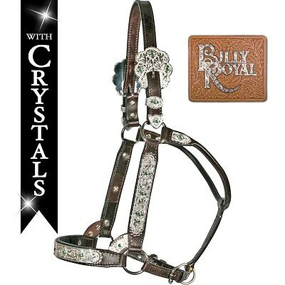 Billy Royal Arizona Premium Show Halter NEW Yearling Size