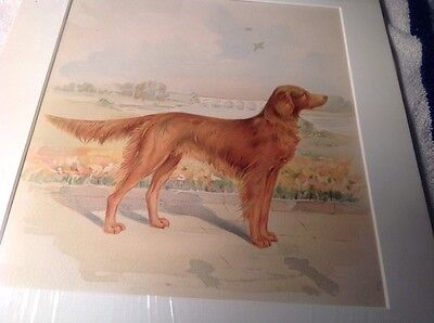 1890S English Or Red Setter Print.