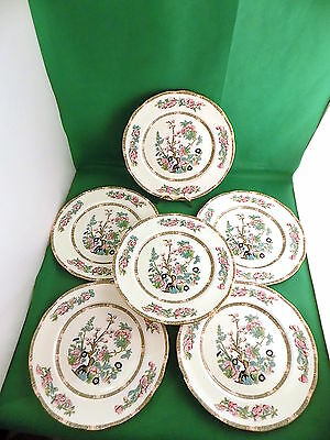 Duchess Indian Tree Dinner Plates x 6