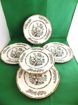 Duchess Indian Tree Dinner Plates x 5
