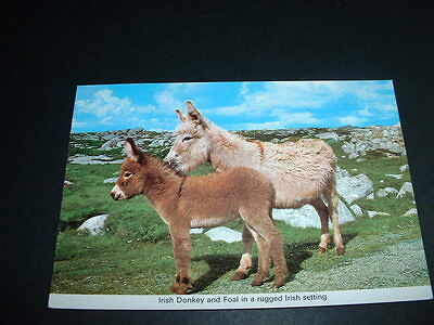Ireland  Irish Donkey And Foal  Postcard