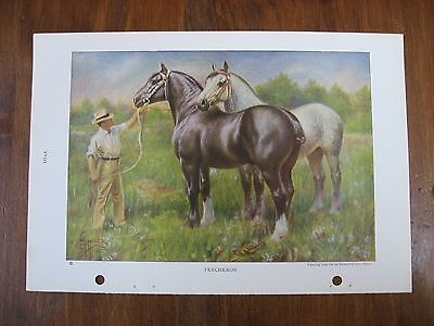 Vintage National Geographic Edward Miner Percheron Horse Print