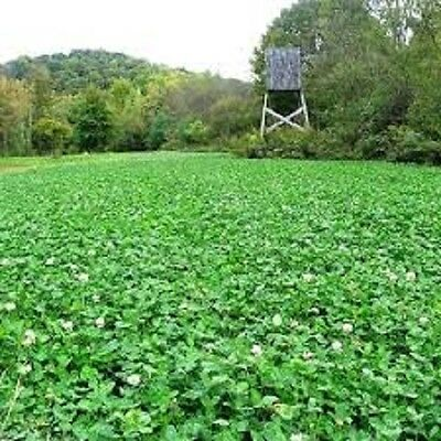 50 Lbs Deer Hunters FALL DEER FOOD PLOT SEED MIX Wheat Oats Rye Peas + Brassicas