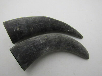 2 Cow horns .... x2b75... Unfinished, raw cow horns.,.....