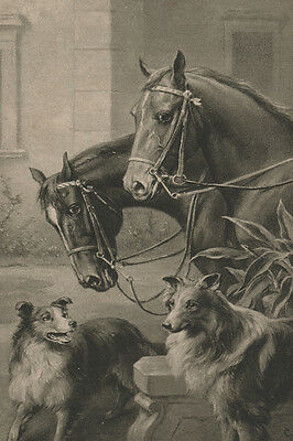 Antique Photo of Collies & Horses by Carl Reichert LARGE New Blank XMAS Cards