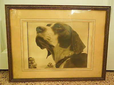Vintage Painted on Dog Photograph Matted and Framed - Hound