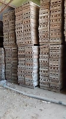 Potato Chitting trays - Decorative wooden boxes