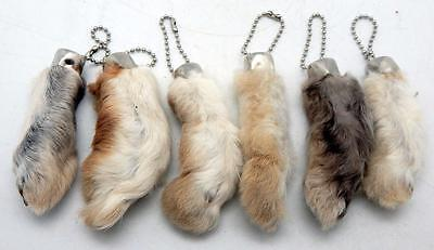 6 Natural Color Real Authentic Lucky RABBITS FEET Foot Key Chains New