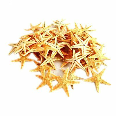 Starfish Natural 3-4cm  Embellishments Shells Craft Beach Weddings 1- 100 avail