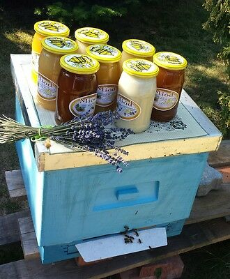 PURE Raw  Honey  --  RAPESEED 1,15KG ---   - from POLAND -- 100% ORGANIC