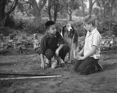 Tv's Favorite dog LASSIE with Tommy Rettig  8x10 Photo 467
