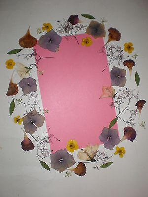 20 mixed  REAL PRESSED FLOWERS & LEAVES card making, scrapbooking