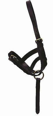 Hy Leather Foal Slip Size Small-Large, Brown/ Black 1279P