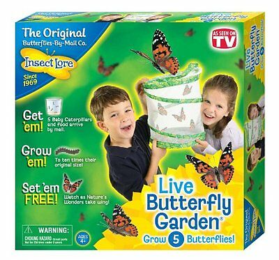 Insect Lore Live Butterfly Garden  Hatching Kit Childrens Butterfly Play Set