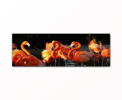 flamingos bild auf leinwand 4 teile picture on canvas chf picclick ch. Black Bedroom Furniture Sets. Home Design Ideas