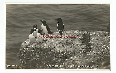 Wales Anglesey Puffin Island 2 Real Photo Vintage Postcards 25.2