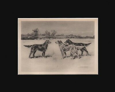Antique Irish & English Setter Dogs Print  by Arthur Wardle 1897 Matted