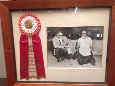 1967 Photo Dog Show Ribbon Chicago IL International Kennel Club Scottish Terrier