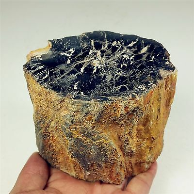 "4.09"" 1197g Polished PETRIFIED WOOD BRANCH Fossil Madagascar A1196"