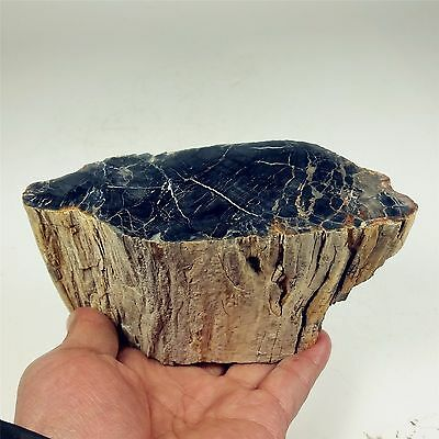 "5.55"" 979g Polished PETRIFIED WOOD BRANCH Fossil Madagascar A1197"