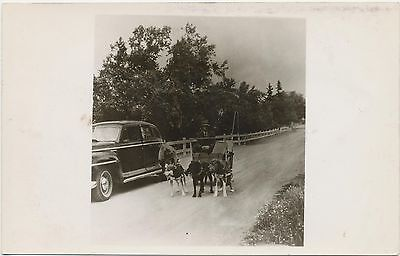 SCARCE Late 1940s Antique Car & Man Driving Dog Buggy RPPC Real Photo Postcard