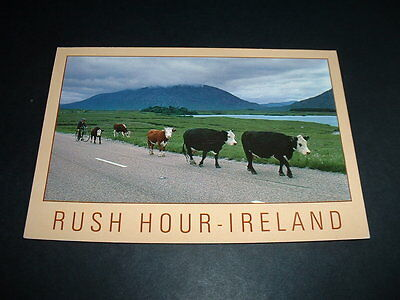 Irish  Postcard Ireland   Get What You See  (A10