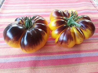Tomate Purple Sunrise, SENSATIONELLE Fleischtomate!