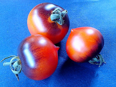 Samen TOMATE - BLUE STRIP - traumhafte Optik - Topsorte!