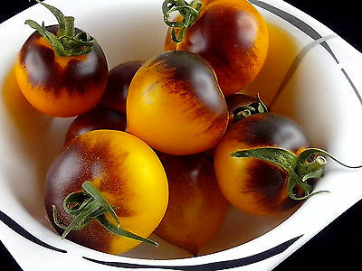 Samen TOMATE - Orangepurple Strip - traumhafte Optik - Topsorte!