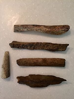 Fossilized Whale Bones from  Alaska ,