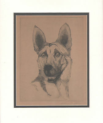 Vintage German Shepherd  Dog Etching Pencil Signed by Arthur St. Claire LG 11X14