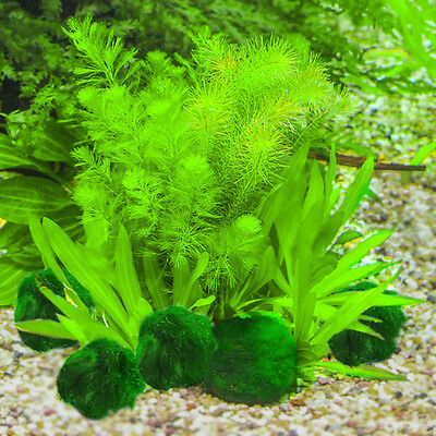 Marimo Moss Balls Live Aquarium Plant Algae Fish Shrimp Tank Ornament New