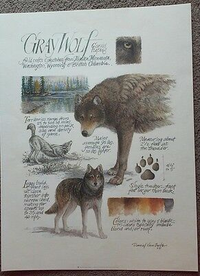 '96 Art Poster Print GRAY WOLF NOTES by Daniel Van Zyle