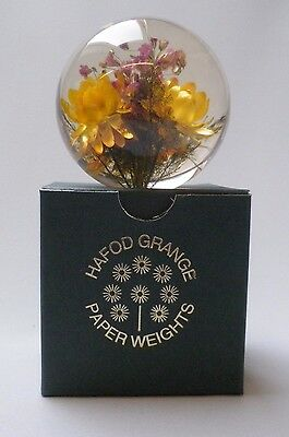 Hafod Grange Paperweight 3 Helichrysum - Large Size - Brand New in Box
