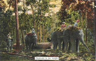 Early 1900s Elephants in Jungle Unused Burma Postcard 109