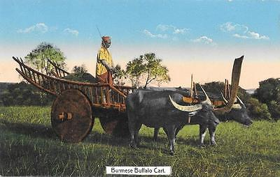 Early 1900s Burma Buffalo Cart Unused Postcard by Ahuja 29