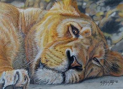 Original Zeichnung Löwin Löwe Katze original wildlife drawing lioness lion cat