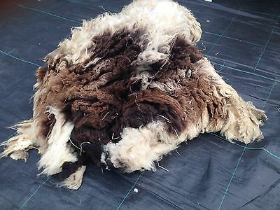 jacob sheep rare breed raw wool/ fleece 1kg