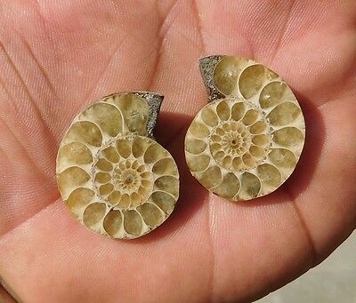 89.96 Cts Good Quality Genuine A++ Ammonite Mix Loose Gemstone
