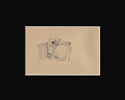 Bull Terrier Dog 1940 Sepia Print by Lucy Dawson 8X10 Taking a Nap