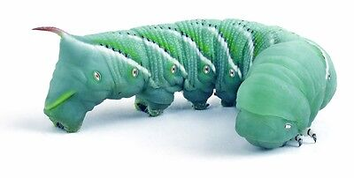 Live Hornworms 25 small  Free Shipping Available or FedEx!!