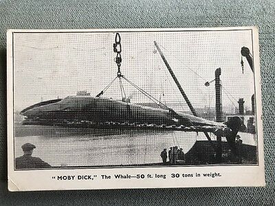 Artic Circle Off N. Norway Arctic Whaling Co Whale MOBY DICK 50 Feet May 1931