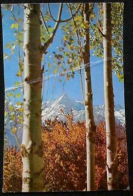 Pakistan International Airlines *sheghar Valley Skardu* Pia Issued Postcard!