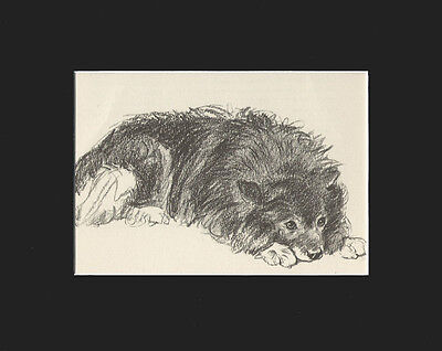 Dog Print Keeshond Dog Relaxing by Lucy Dawaon 8X10