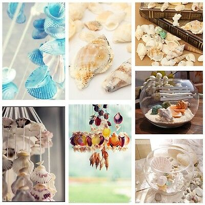 Beach Mixed SeaShells Mix Sea Natural Starfish Shells Craft Aquarium Decoration