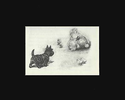 Scottish Terrier Puppy Sees Hen with Chicks! Cute Marguerite Kirmse Print 1941
