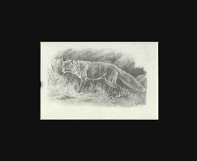 Fox Etching Drawing by Marguerite Kirmse Print 1941